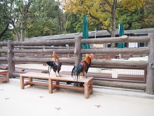 万騎が原ちびっこ動物園 こども自然公園