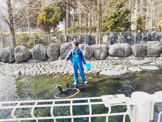 箱根園水族館アザラシショー