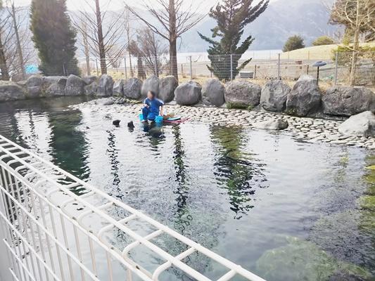 箱根水族園アザラシショー