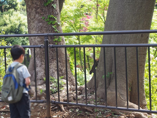 野毛山動物園りす