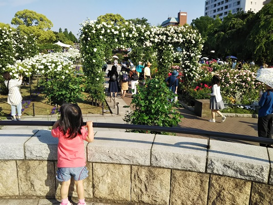 山下公園バラ園