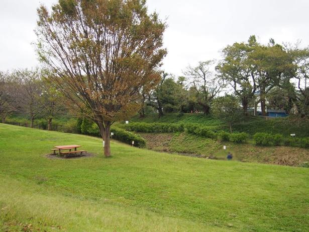県立相模三川公園芝生