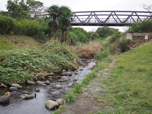 県立相模三川公園橋